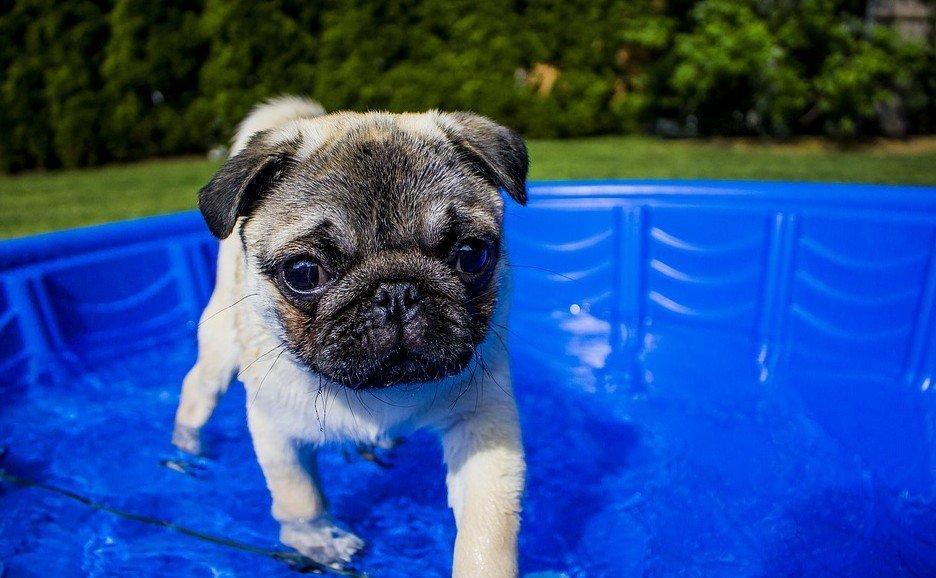 zwemmen met je hond puppy