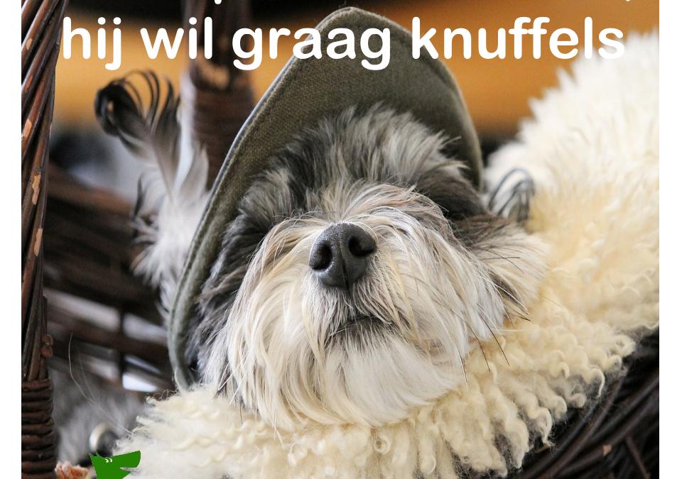Pas op voor de hond hij wil graag knuffels