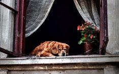 Hoe het leven van een oude hond wat makkelijker te maken - foto pixabay