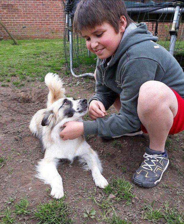 evelien kinderen en honden spelen