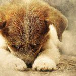 15 signalen waaruit blijkt dat je hond pijn heeft