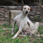 Honden met jeuk, oorzaken en tips