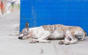 kanker bij honden foto pixabay