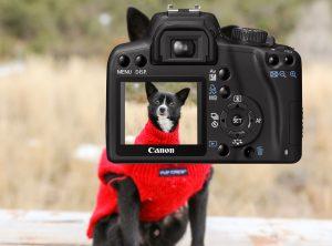 foto van je hond - maak een selfie