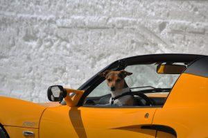 hondennamen dure auto