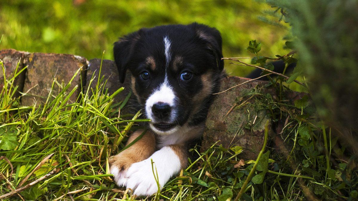 puppy Veilige lentetips voor honden