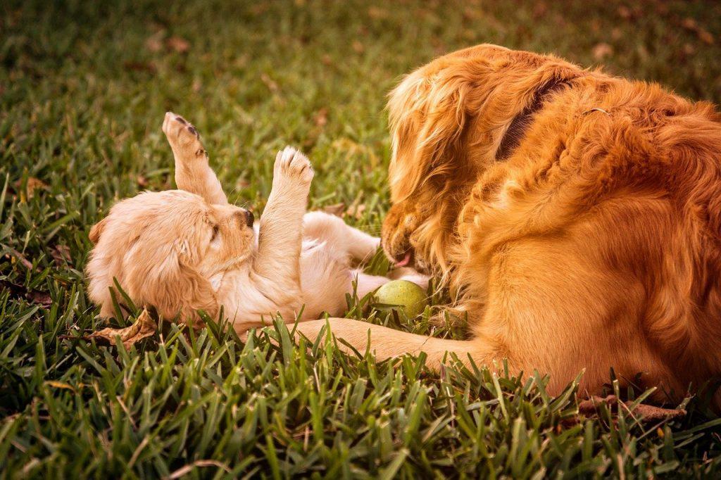 Tips bij de aanschaf van een puppy
