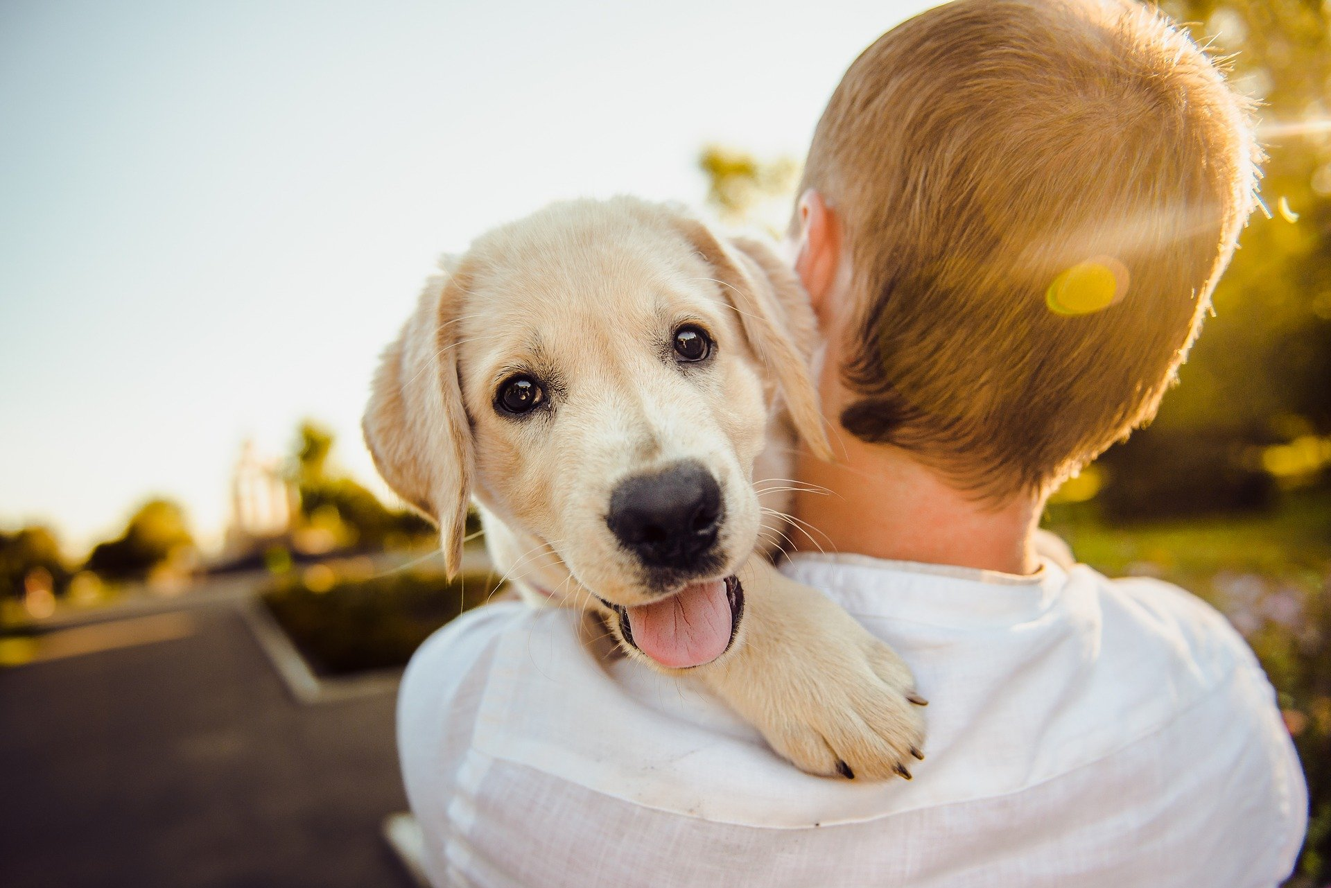 hondeninstructeurs