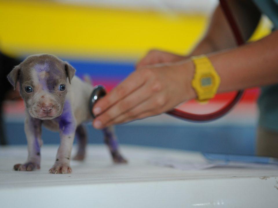 hond vaccineren