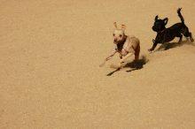 hondsdolheid of rabiës