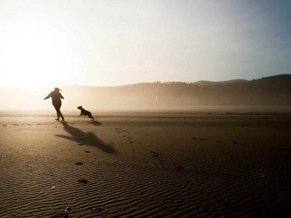 Afscheid nemen van je hond, hoe en wanneer ? - waardig afscheid nemen