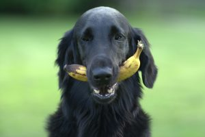 fruit hond - fruit hond