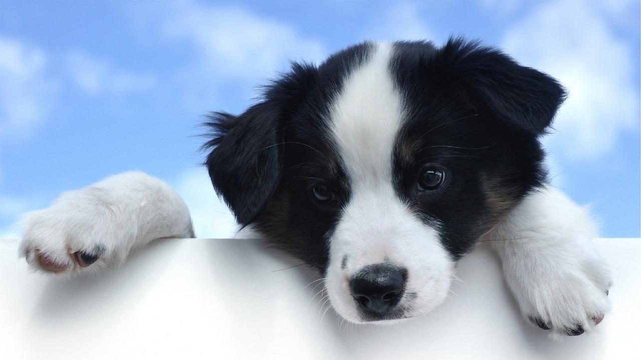 hondennamen teefje