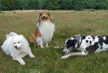 alle hondenrassen met foto