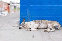 hondenziekte noorwegen
