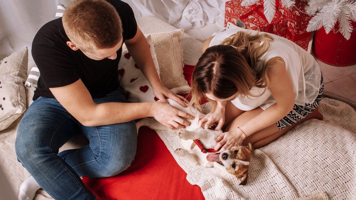 Hondenrassen voor een appartement