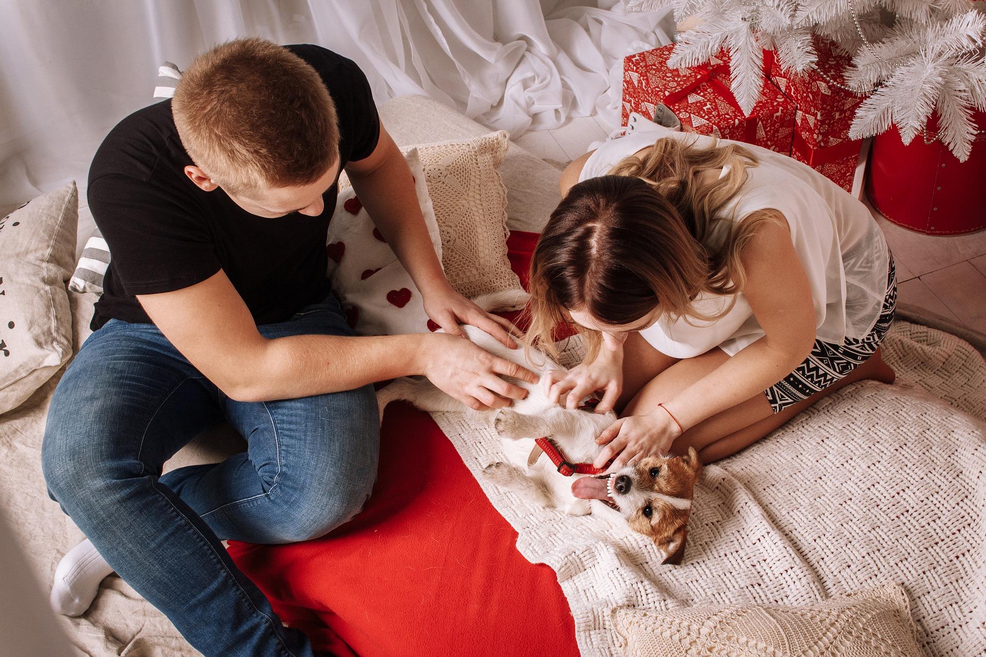 5 tips bij het afsluiten van een hondenverzekering