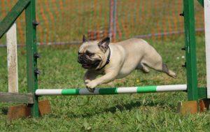 nieuwe hond trainen