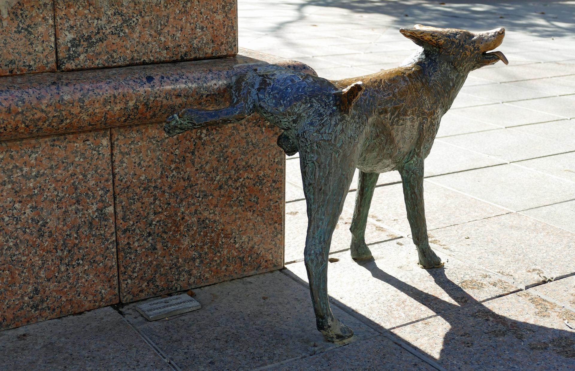 blaasontsteking bij de hond