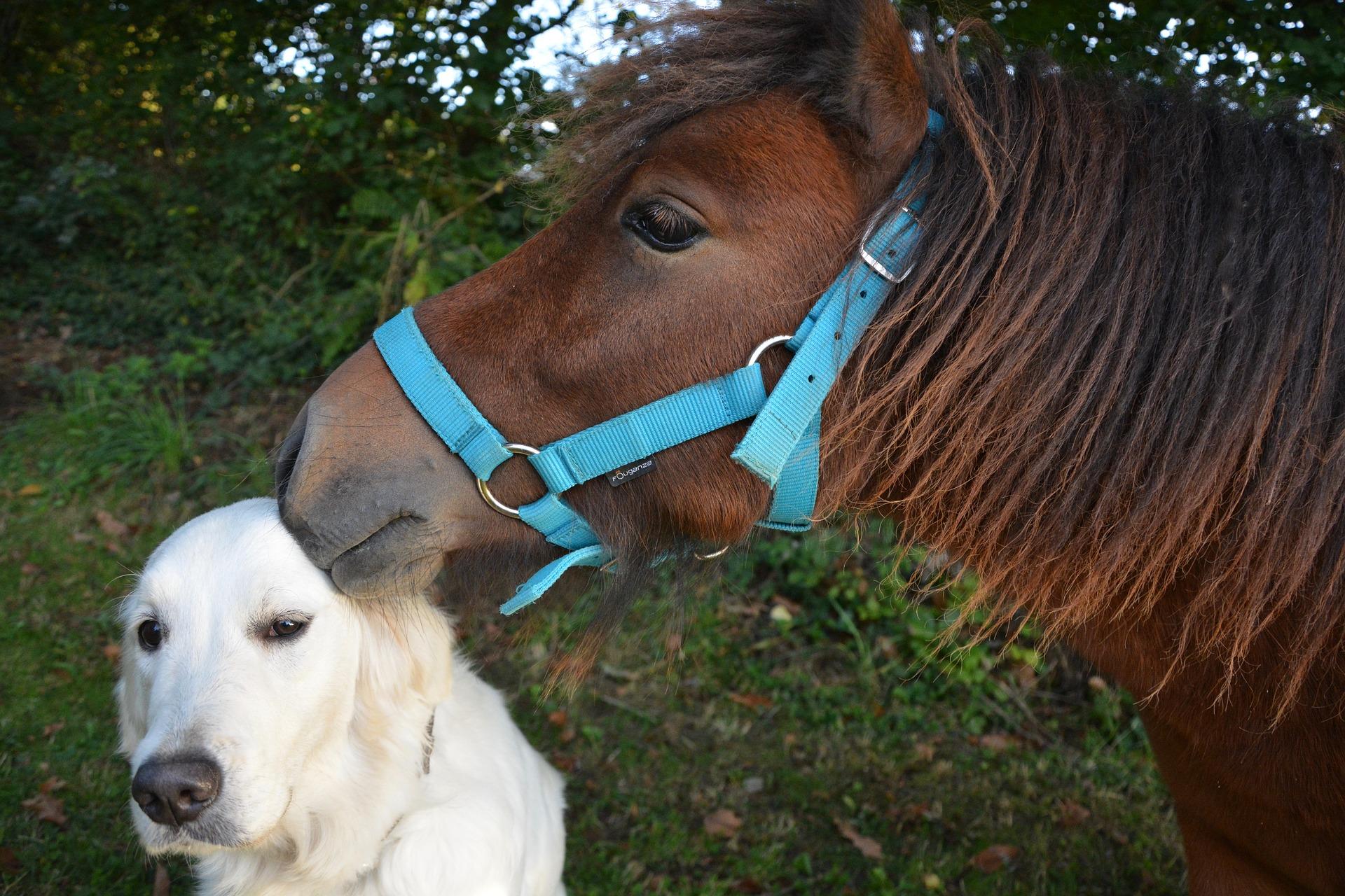 dierentaal paard