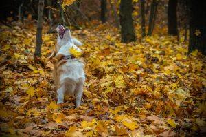 herfstbladeren zijn gevaarlijk - herfstbladeren zijn gevaarlijk