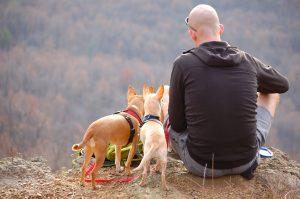 hondenoppas dogsitter