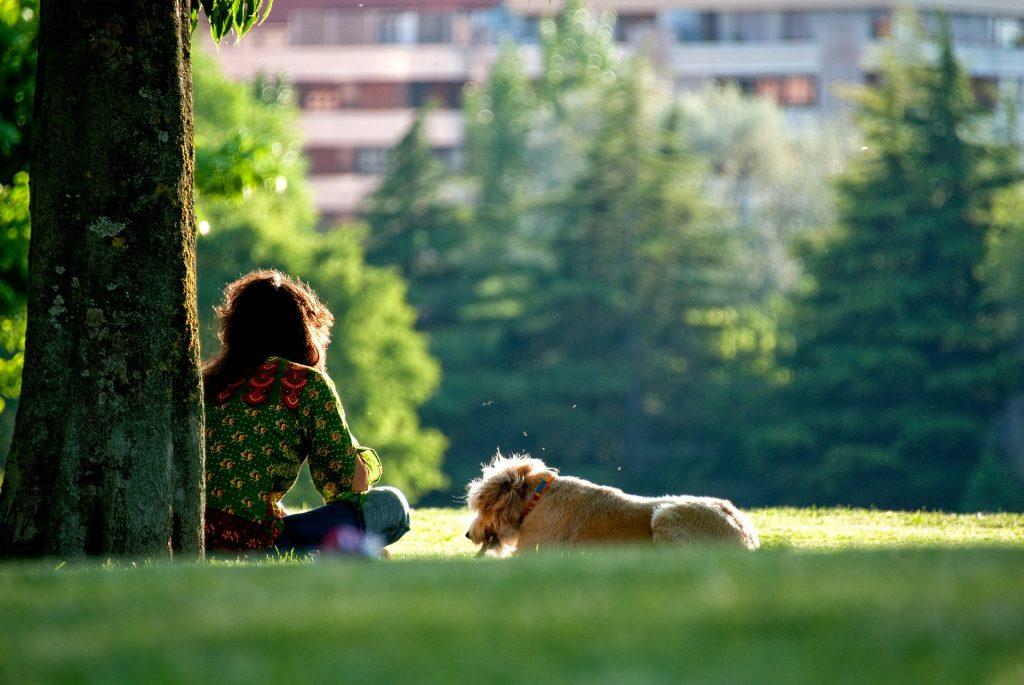 Honden houden je gezond - hondenoppas hondenopvang dogsitter