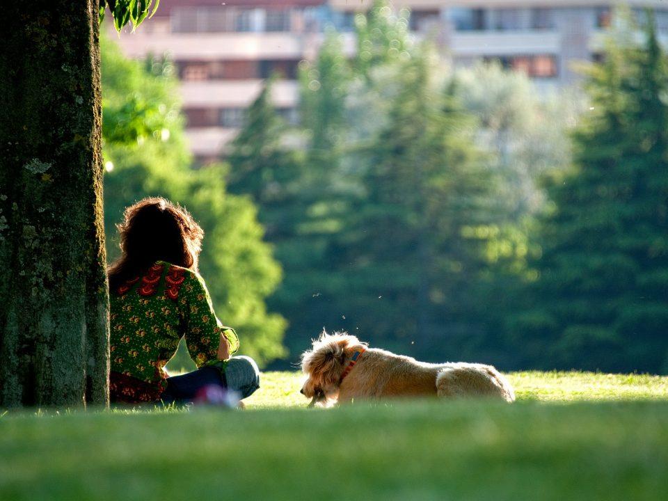 hondenoppas hondenopvang dogsitter
