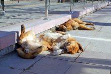 straathonden koude vloer slapen