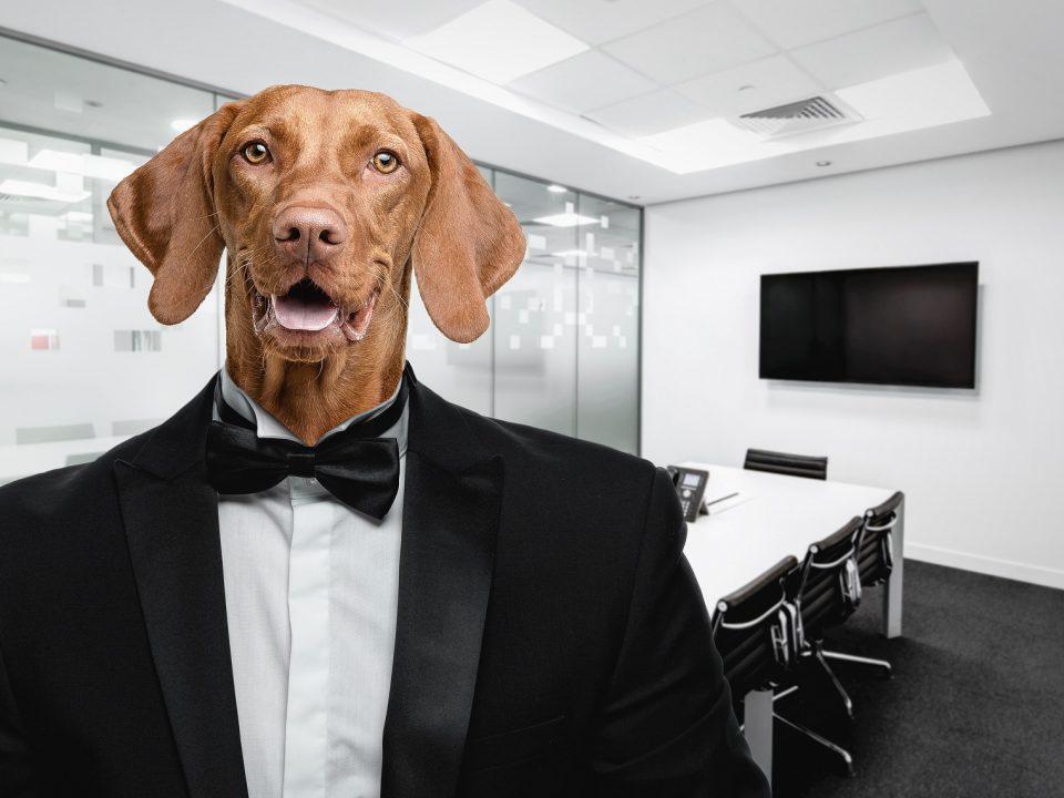 Een hond op de werkvloer doet stress verminderen