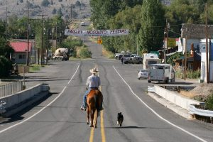 Horse and Dog Trail hondensport - paardensport