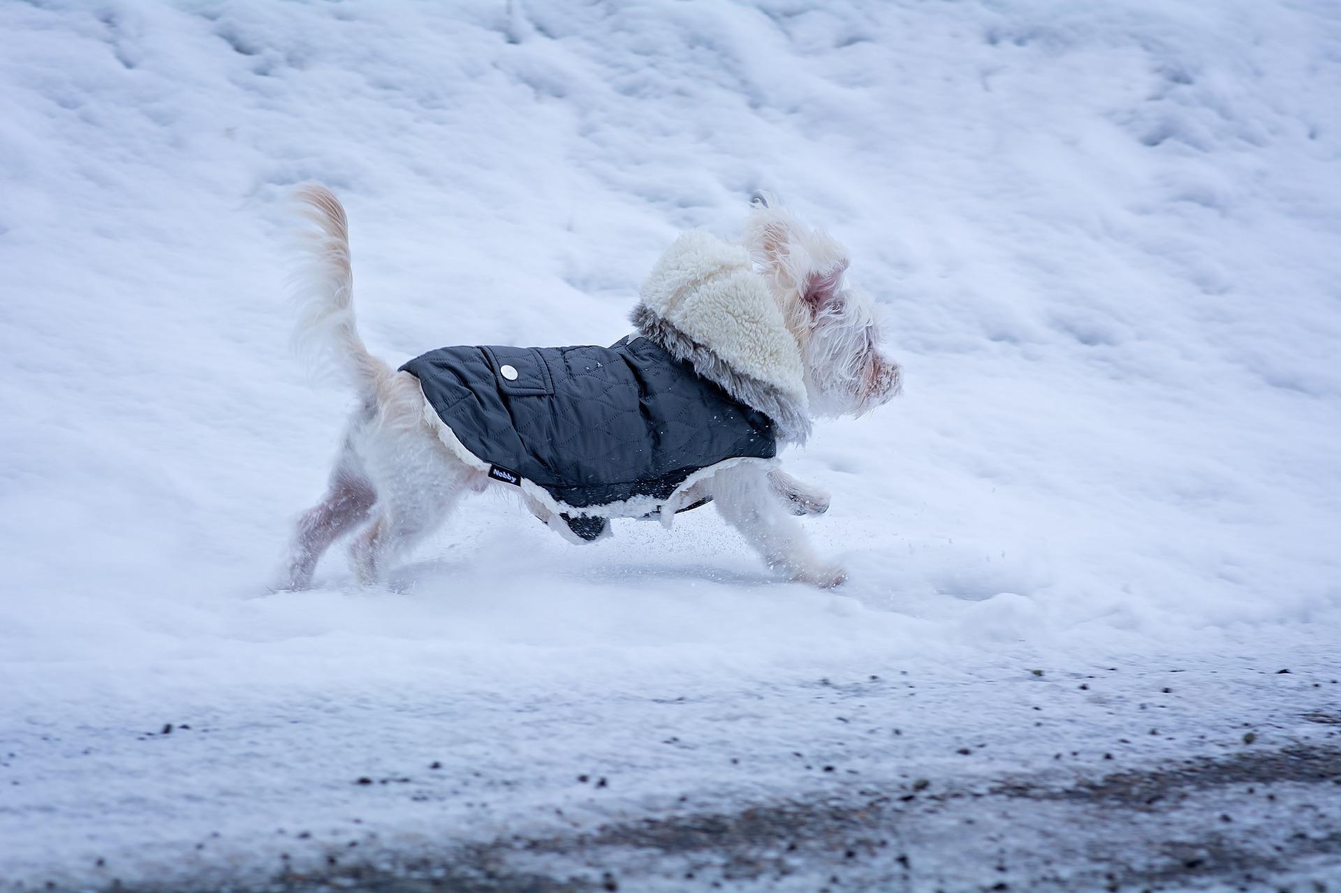 honden bevriezen winterjas