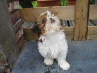 puppy zindelijk maken met krant