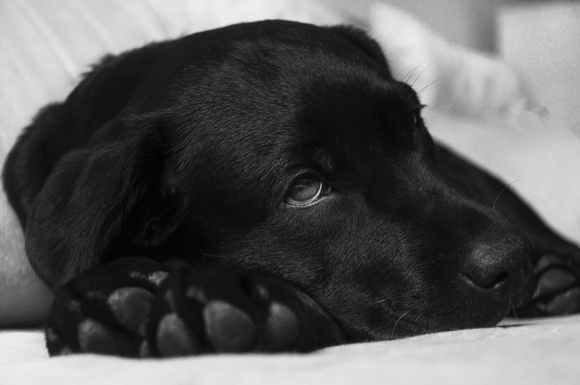 10 belangrijkste hondenziektes