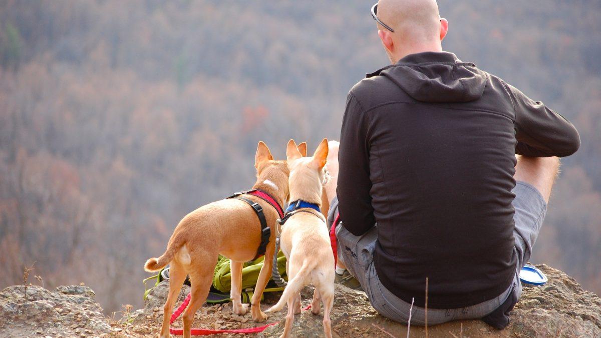 5 tips bij het afsluiten van een honden- verzekering - 5 tips bij het afsluiten van een hondenverzekering