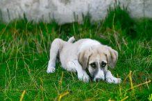 De 10 belangrijkste hondenziektes op een rij