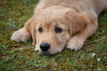 10 tekenen van depressie bij honden