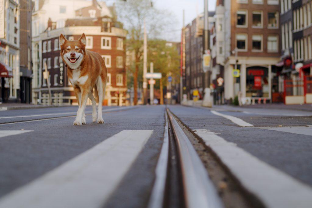 Geen Hond in Amsterdam - Kortfilm