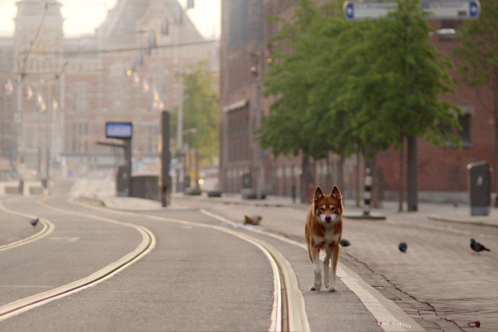 Geen Hond in Amsterdam kortfilm