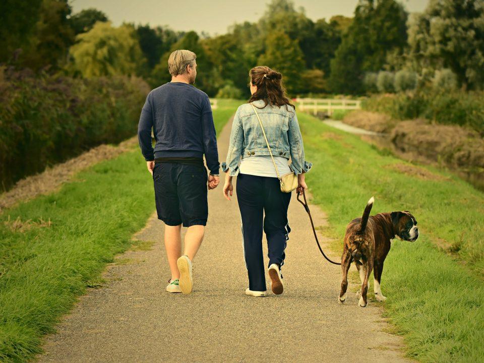 Gezond blijven dankzij de hond