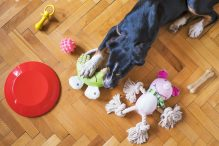 Wat heb je nodig bij de aanschaf van een hond