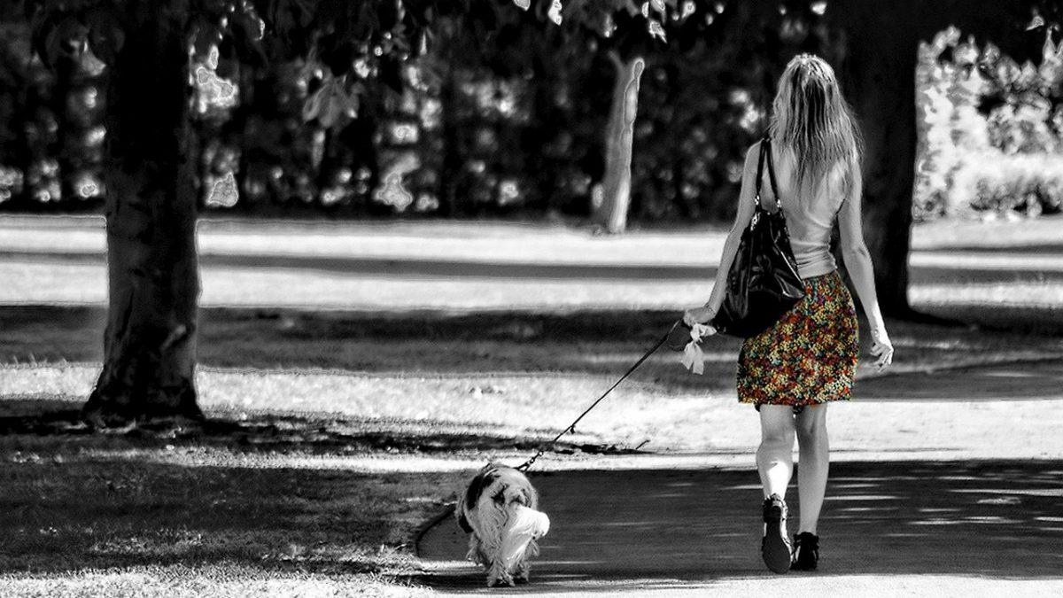 De beste tassen als je de hond uitlaat
