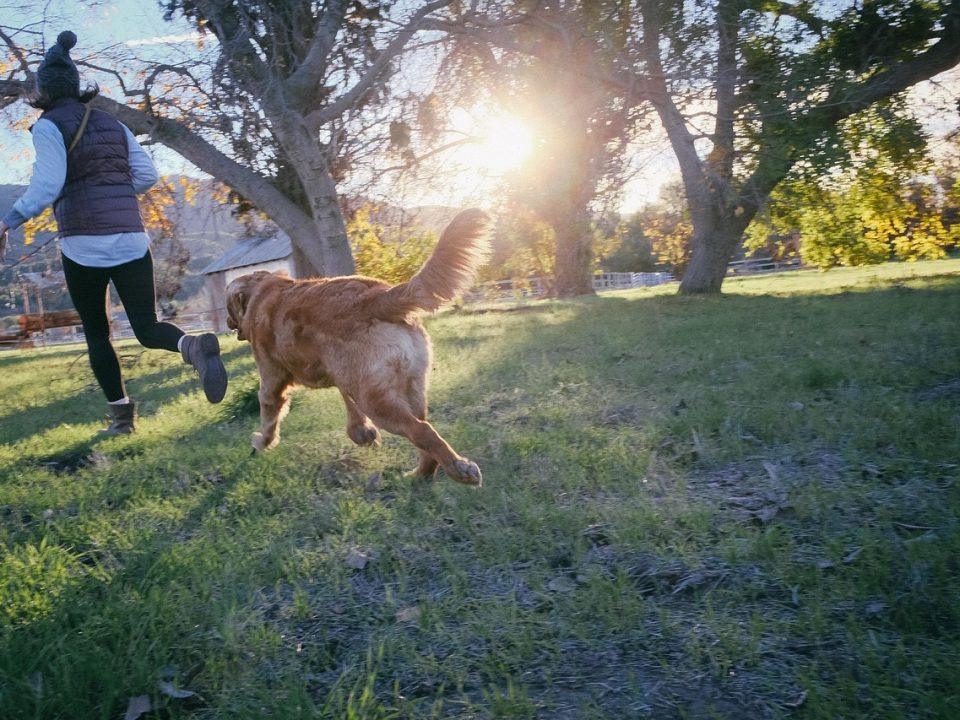 Honden houden je gezond