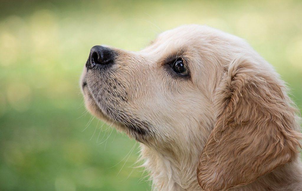 hond - nieuwehond hondenmagazine