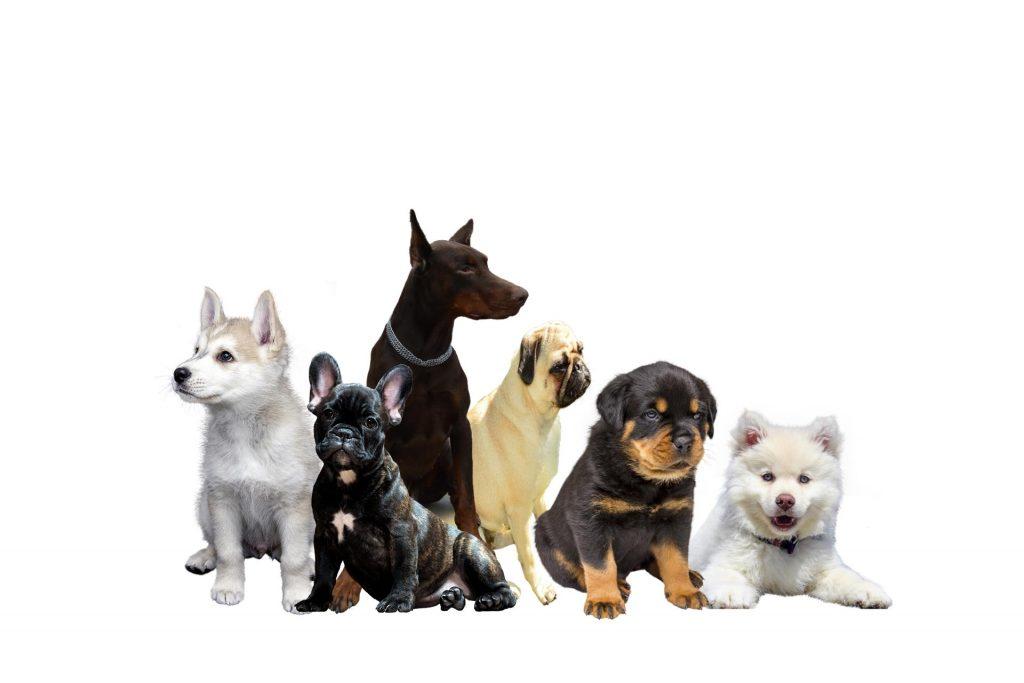 nieuwe hond - nieuwehond