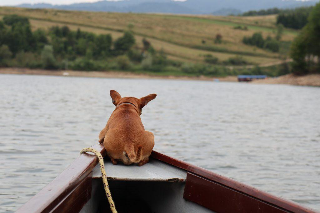 Hoe je hond leren zwemmen - Tips