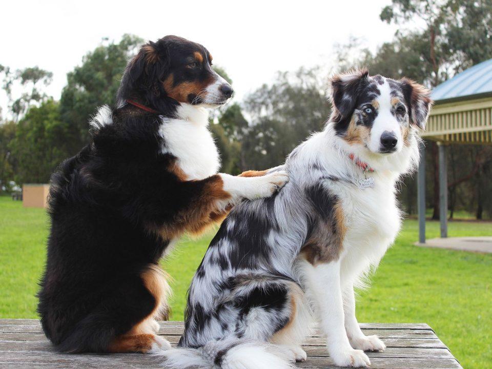 Natuurlijke manieren om vlooien bij honden te bestrijden