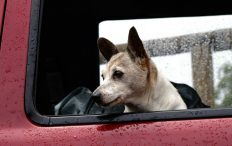 Help mijn hond is wagenziek