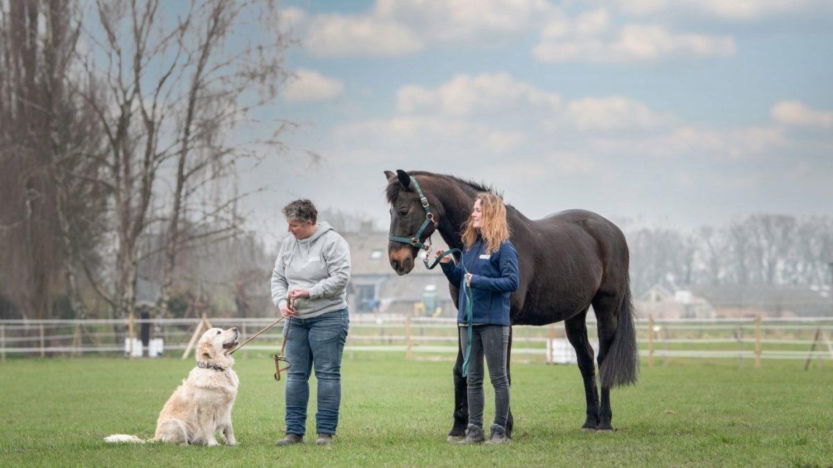 Hulphond Nederland opent Domingo House