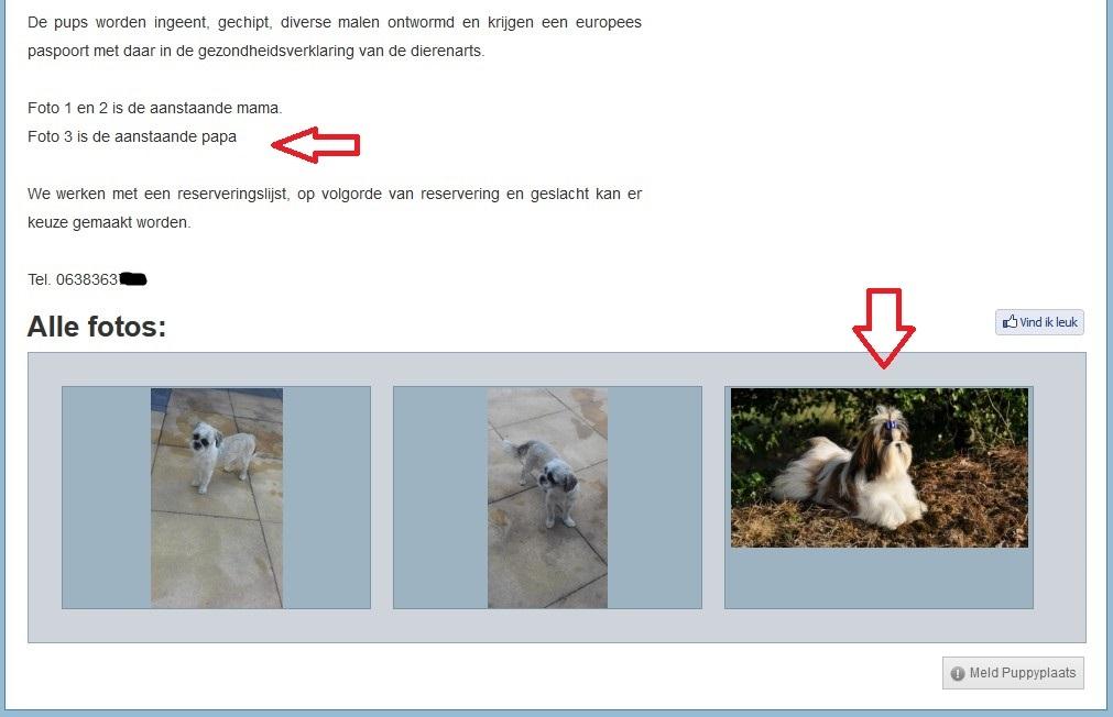 Malafide hondenhandelaars doen rustig verder puppyplaats deel 2